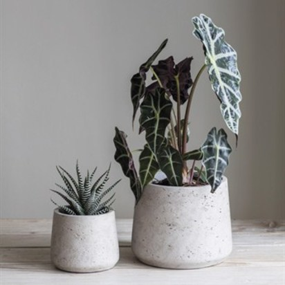 Set of 2 stratton cement plant pots stone spct01