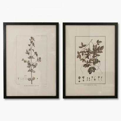 Brookby set of 2 leaf prints in black frame no7041 1.2170